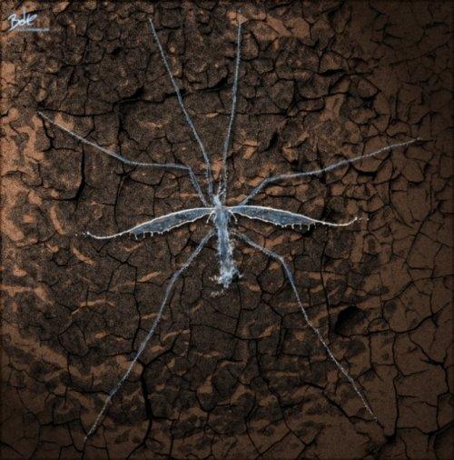 Цифровые изображения немецкого художника B-O-K-E