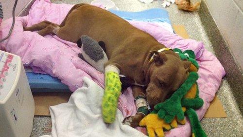 7 собак из приюта, которые спасли жизни людей