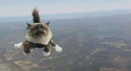 Ай белив ай кэн флай или летающие коты
