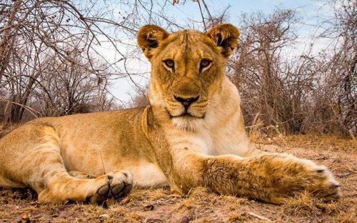 Фотопортреты опасных животных с близкого расстояния