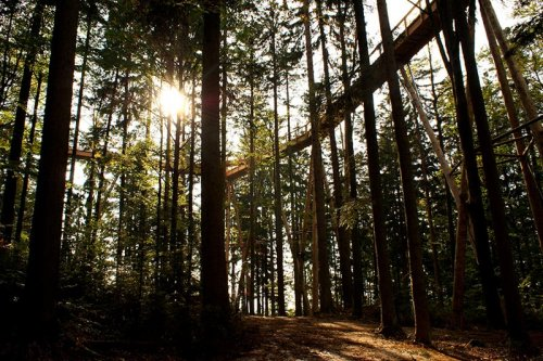 Самая длинная в мире прогулка к вершинам деревьев