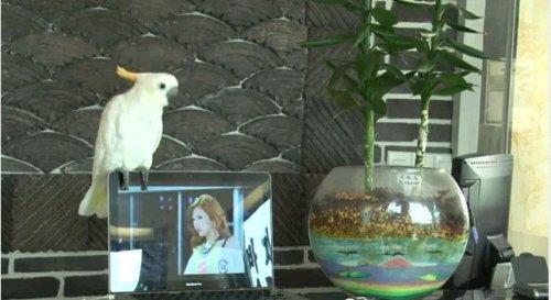 Пение попугая в Gangnam стиле