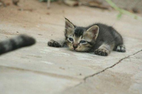 Большая и смешная подборка фотографий с отдыхающими и спящими котами (45 фото)