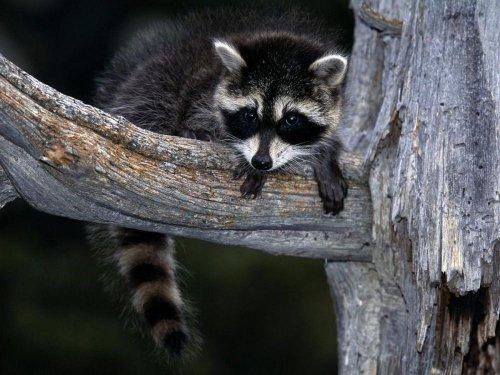В мире забавных животных (42 фото)