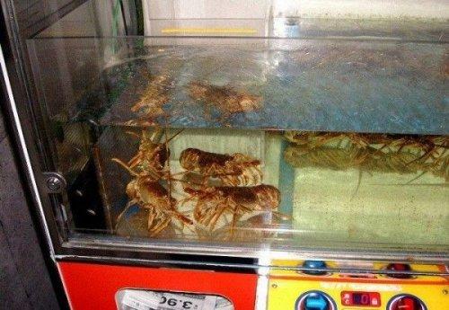 Игровые автоматы с живыми омарами и золотыми рыбками