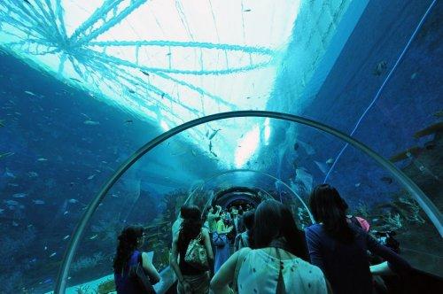 Самый крупный в мире океанариум – Marine Life Park в Сингапуре