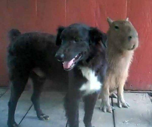 10 Примеров необычной дружбы между животными