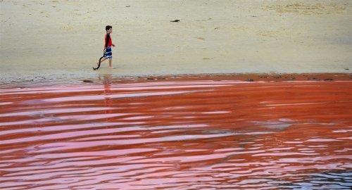 Красная морская вода у сиднейского побережья