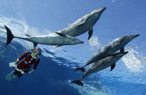 "Санта-Клаусы океанариума ""Морской рай Хаккэйдзима"""
