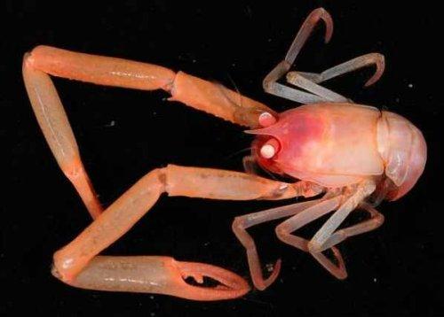 Топ-10: Невиданные существа, обитающие в глубинных водах океана