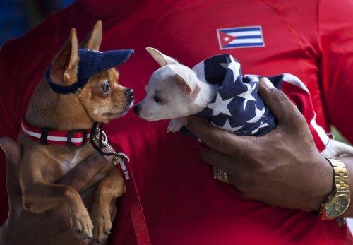 Собаки-участники осенней выставки на Кубе