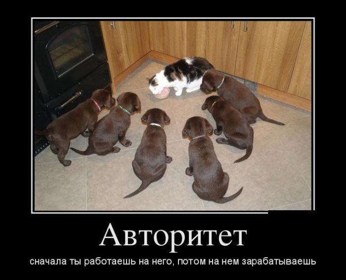 Демотиваторы приколы про животных