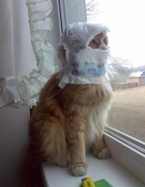 Забавные коты и кошечки (29 фото)