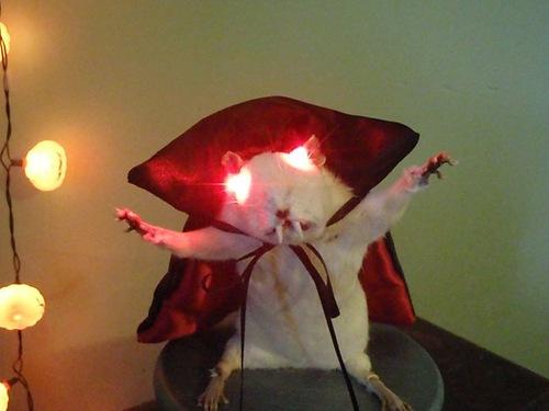 Крыса-вампир приходит на помощь Сидящей лисе