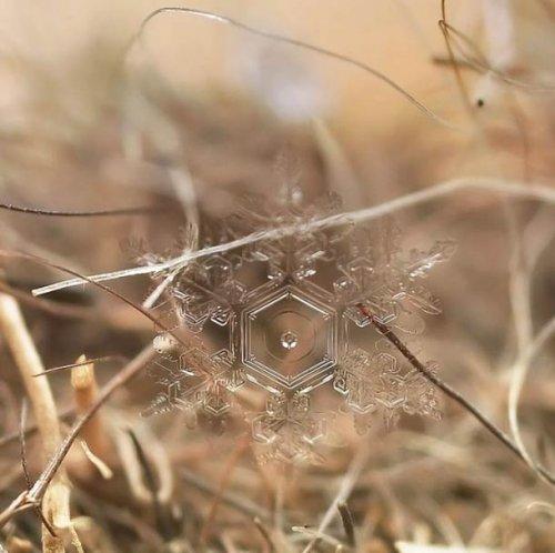 Удивительные макрофотографии ледяных образований и снежинок, сделанные Андреем Осокиным
