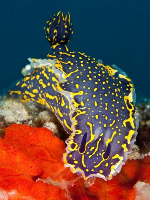 20 Великолепных подводных фотографий