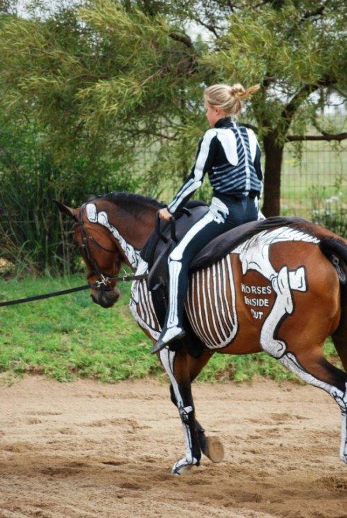 «Лошади наизнанку» – анатомия лошадей, нарисованная на живых лошадях