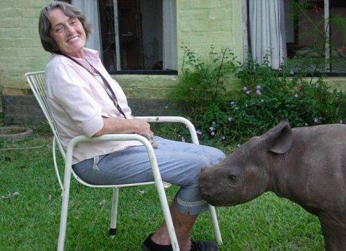 Осиротевшего детеныша носорога растит и воспитывает семья из Зимбабве
