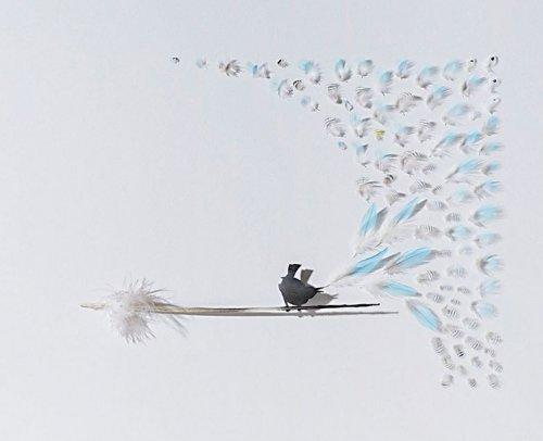 Красивая резная работа по перьям Криса Мэйнарда