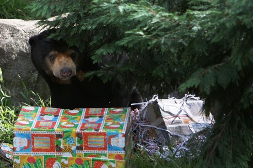 Новогодние подарки для обитателей зоопарка Таронга