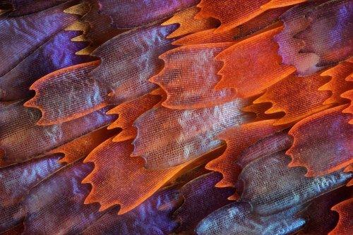 Фотографии-победители 9-го конкурса микрофотографии Olympus BioScapes