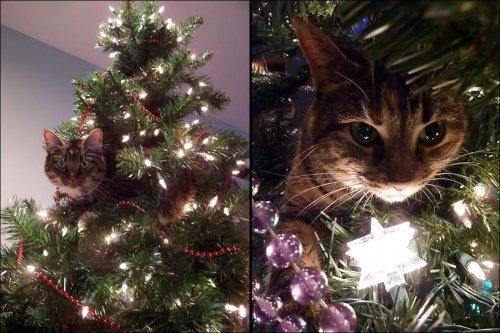 Для кого мы наряжаем новогоднюю ёлку? (36 фото)