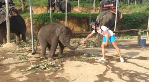 Танцующий слон зажигает под DNB
