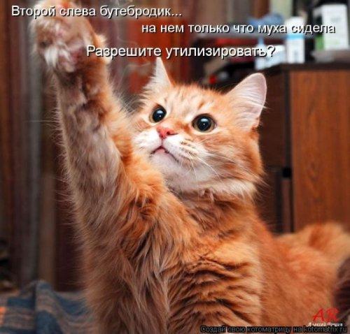 http://www.bugaga.ru/uploads/posts/2012-12/thumbs/1356107347_super-kotomatricy-12.jpg