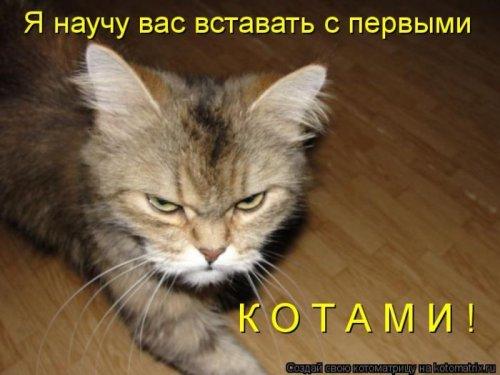 http://www.bugaga.ru/uploads/posts/2012-12/thumbs/1356107354_super-kotomatricy-37.jpg
