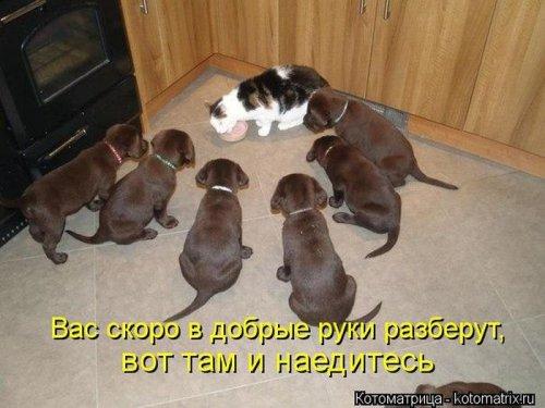 http://www.bugaga.ru/uploads/posts/2012-12/thumbs/1356107368_super-kotomatricy-2.jpg