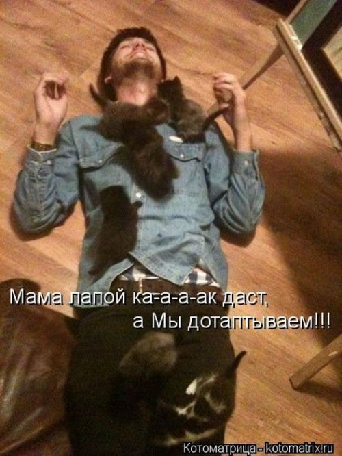 http://www.bugaga.ru/uploads/posts/2012-12/thumbs/1356107383_super-kotomatricy-13.jpg