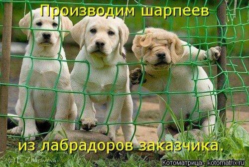 http://www.bugaga.ru/uploads/posts/2012-12/thumbs/1356107383_super-kotomatricy-3.jpg
