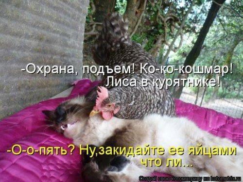 http://www.bugaga.ru/uploads/posts/2012-12/thumbs/1356107393_super-kotomatricy.jpg