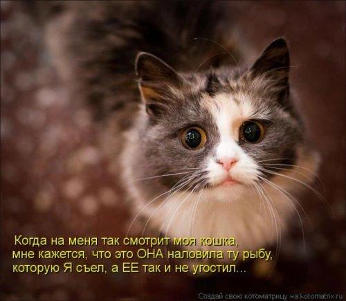 http://www.bugaga.ru/uploads/posts/2012-12/thumbs/1356107397_super-kotomatricy-34.jpg