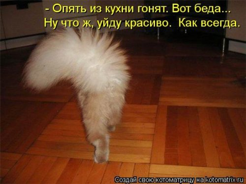 http://www.bugaga.ru/uploads/posts/2012-12/thumbs/1356107420_super-kotomatricy-11.jpg