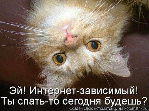 Роскошные котоматрицы (43 шт)
