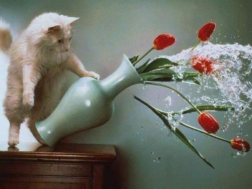 Случайно-удачные фотографии котов и кошек (23 шт)
