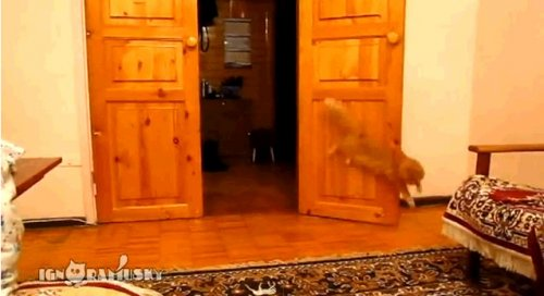 Кот боится СуперМарио