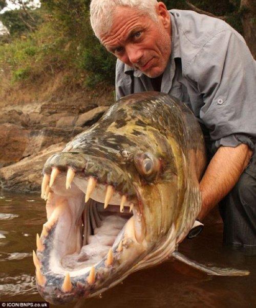 10 Ужасающих рыб-убийц