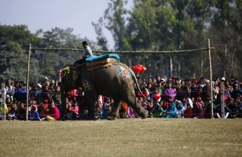 Необычный фестиваль слонов в Национальном парке Читван