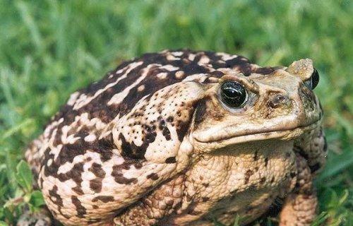 10 Ядов животных, обладающих поразительно специфическим предназначением