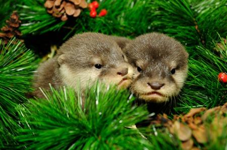 20 Милых животных, празднующих Рождество