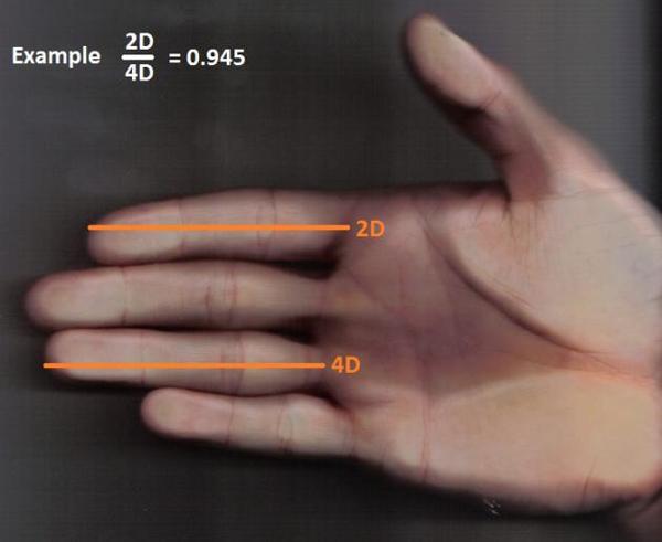 Расстояние длина ладони равна член