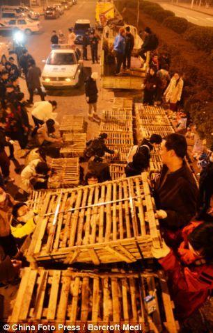 Спасение тысячи кошек в Китае