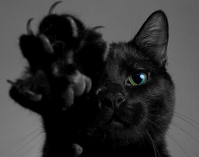 Фото черных кошек