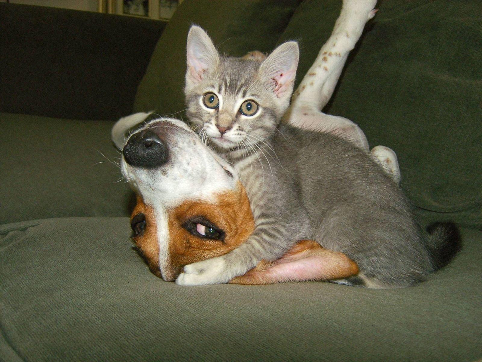 Смешные фото и видео с кошками, простите спокойной ночи