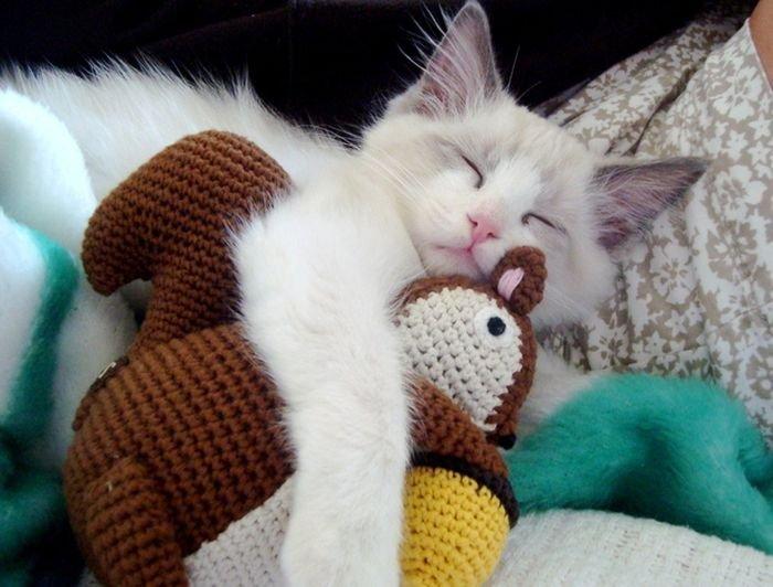 коты с игрушками фото необязательно