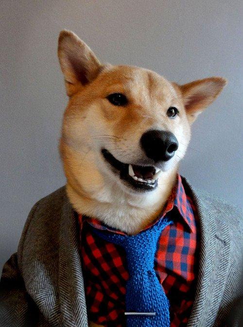 Собака-модель, демонстрирующая мужскую одежду