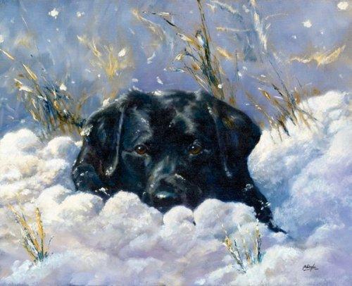 Удивительные истории выживания зимой