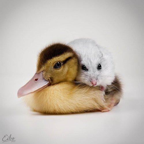 Прелестные животные в фотографиях Eibo